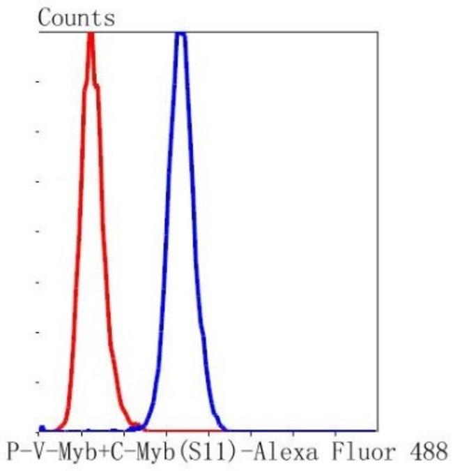 c-Myb (p Ser11) Rabbit anti-Human, Clone: SZ04-81, Novus Biologicals 100μL:Antibodies